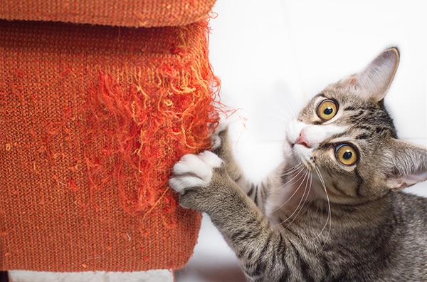 Kitten Clawing Orange Sofa copy
