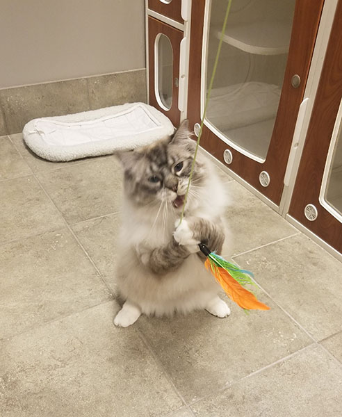 Brookhaven Animal Hospital - boarding cat